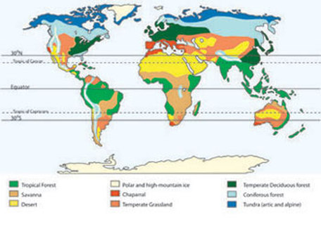 Biomes ecosystems and biomes biomes are the major regional groupings of plants and animals discernible at a global scale there are several factors which determine the distribution gumiabroncs Choice Image